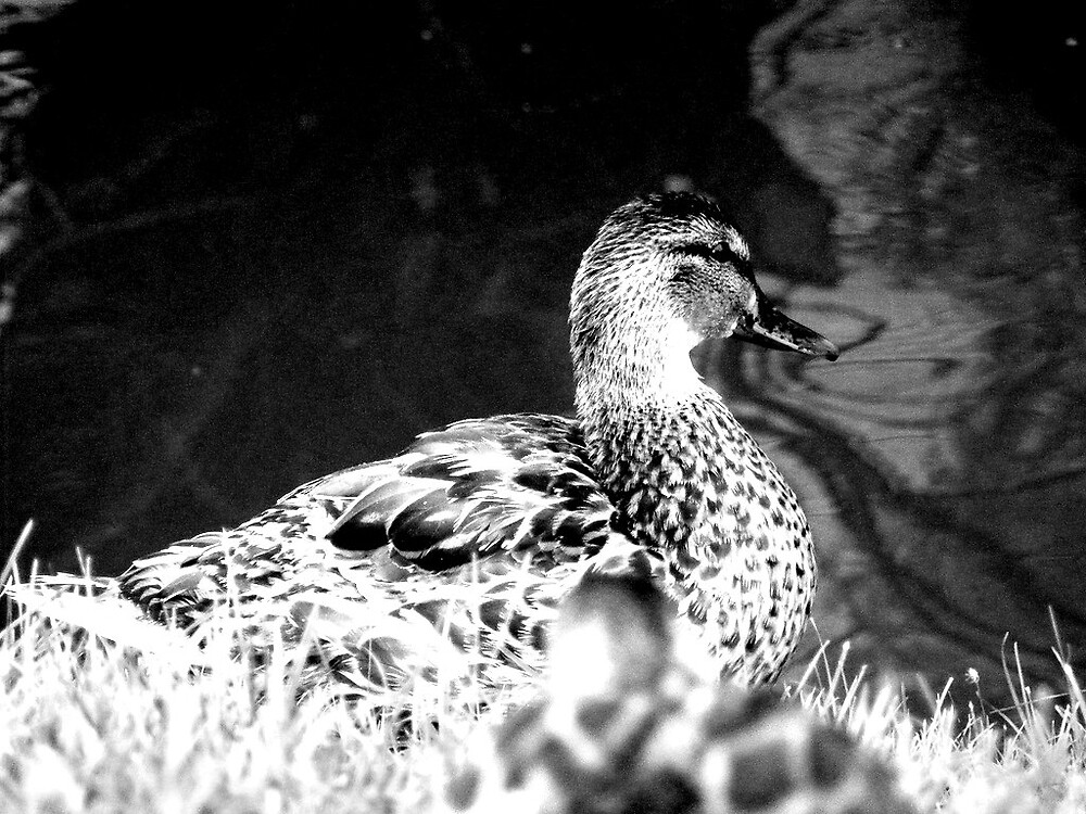 Duck by myinspirations