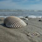 Shell game by Dave Parrish