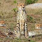 A Cheetah Family by Anthony Goldman
