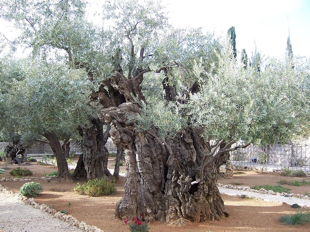 Garden of Gethsemane by Christopher Warren