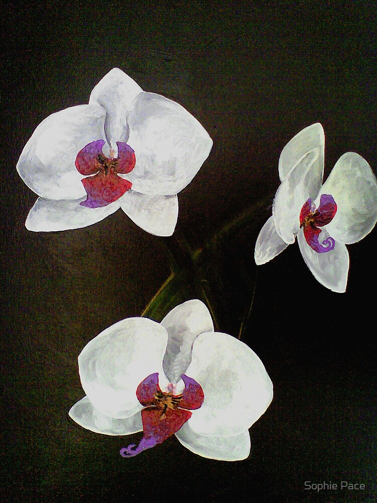 Orchids by Sophie Pace