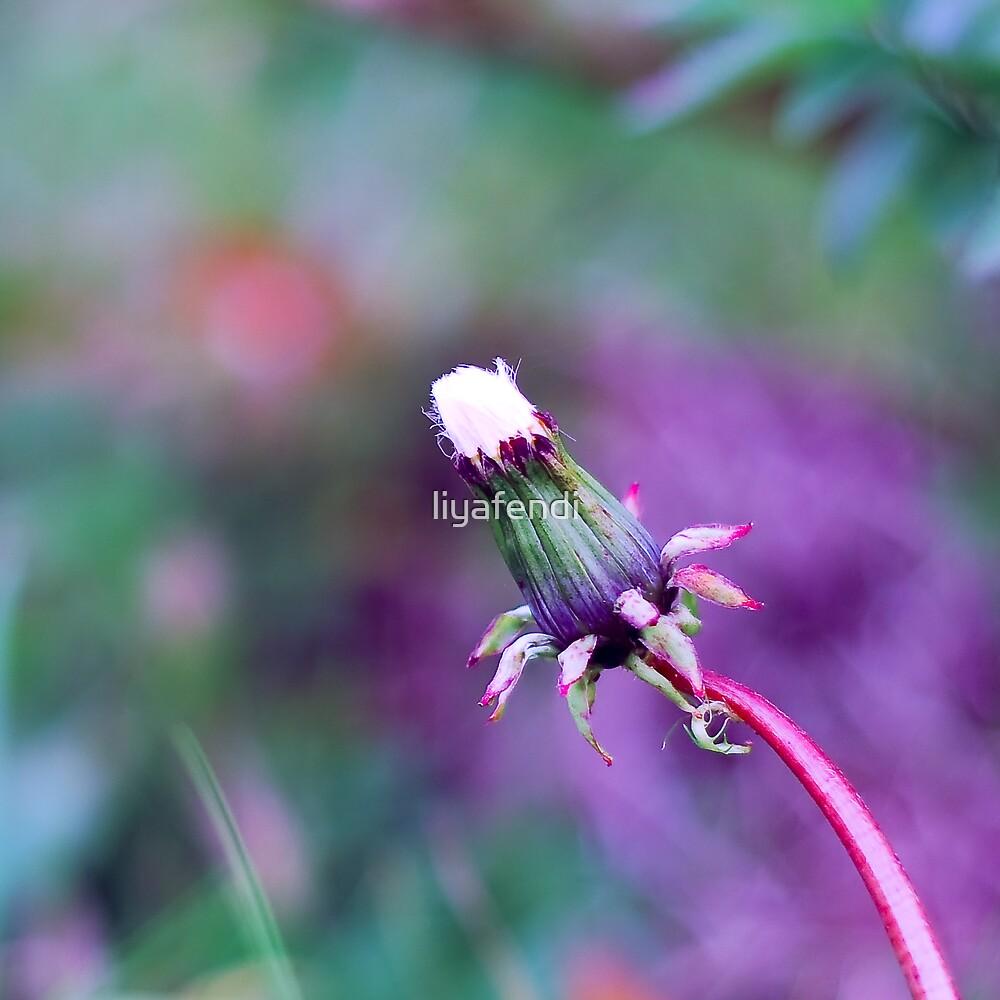 Unbloom dandelion by liyafendi