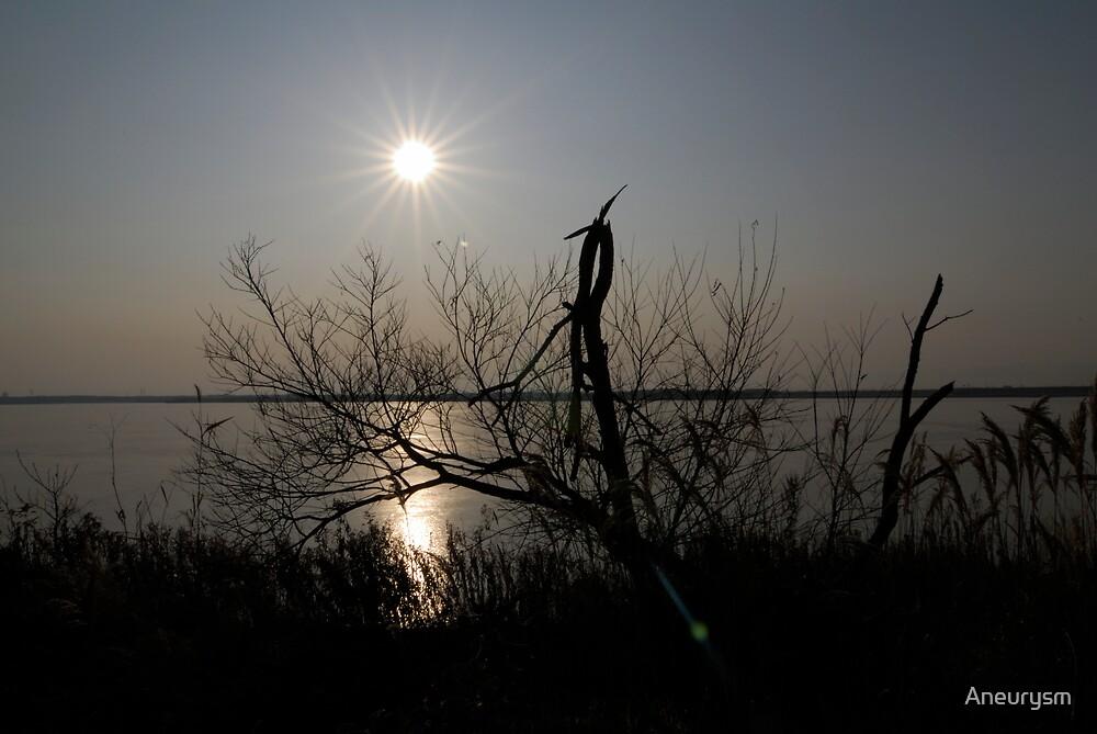 Sun rise by Aneurysm