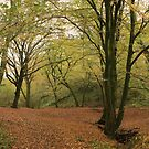 Autumn woodland by miradorpictures