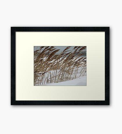 Snowy Beach Framed Print