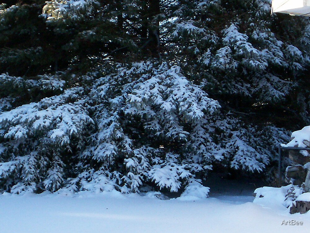 snow covered evergreen by ArtBee