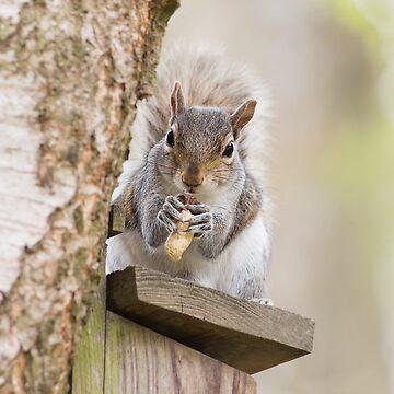 Contented Squirrel by NatalieKinnear