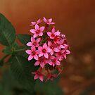 just flowers by Bernard Raskin