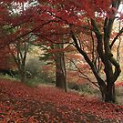 Winkworth arboretum by miradorpictures