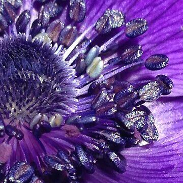 Purple Anemone by LyndaAnneArt
