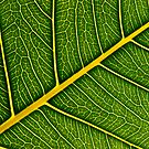 Leafy avenues by Vikram Franklin