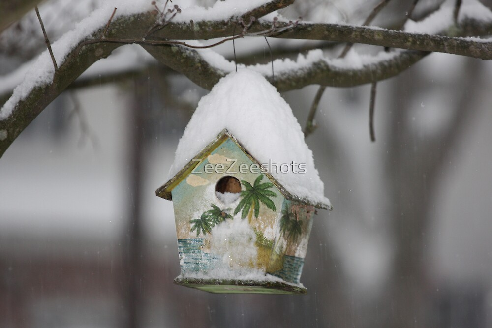 My birdhouse is cover with snow by ZeeZeeshots