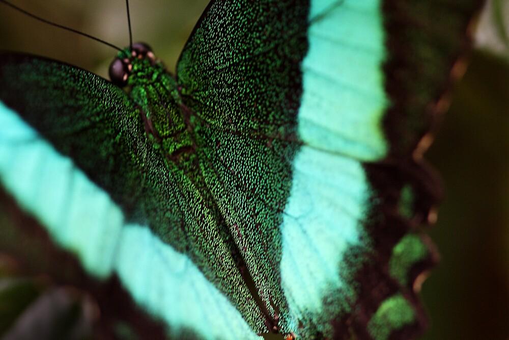 Butterfly 5389 by Doug Wilkening