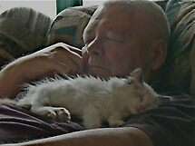 Little Cat Naps by Carol Clifford