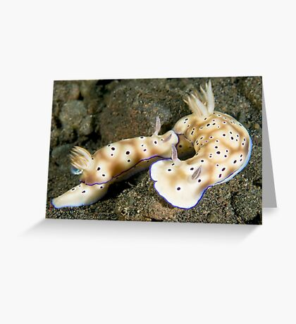 Nudibranch Foreplay Greeting Card