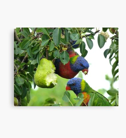 Pear feast Canvas Print