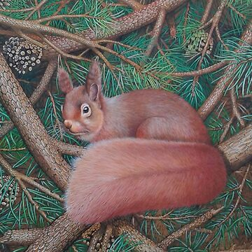 Red Squirrel  by brooke1312