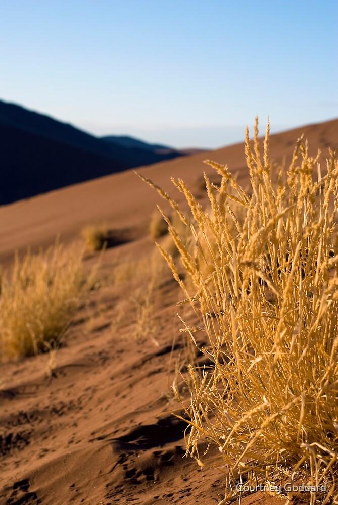 Dune 45 by Courtney Goddard