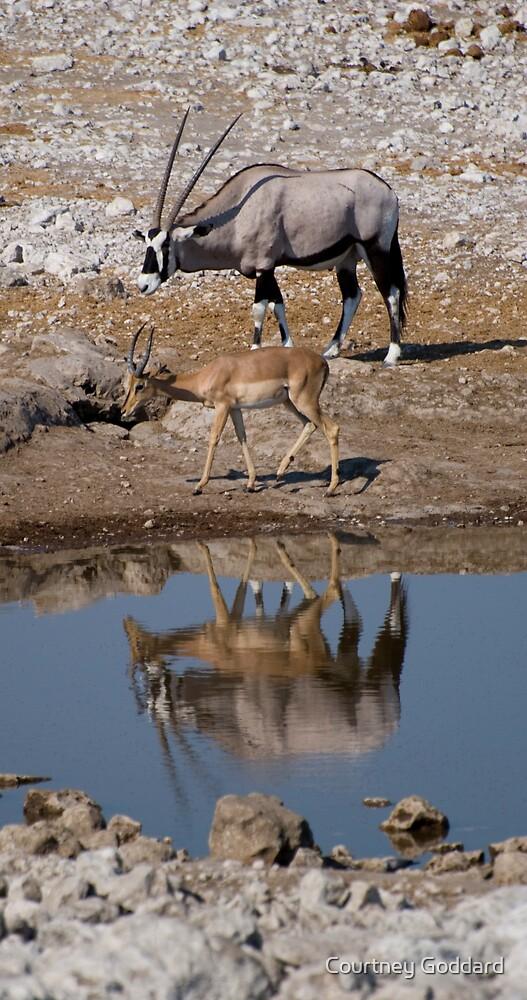 Oryx and Impala by Courtney Goddard