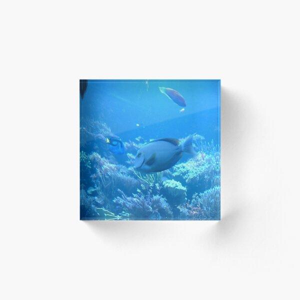 Tropical Fish Blue Tang Acrylic Block