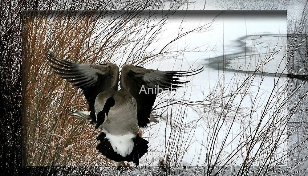 Frozen Flight by Anibal