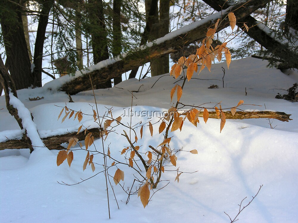 brown leaves and fallen snow by 1busymom