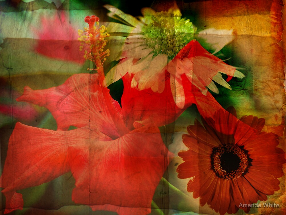 Floral Montage Series 6 by Amanda White