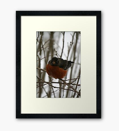 Want. Spring. NOW. Framed Print