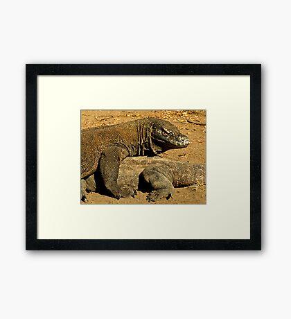 Komodo Dragons Framed Print