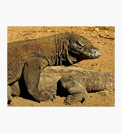 Komodo Dragons Photographic Print
