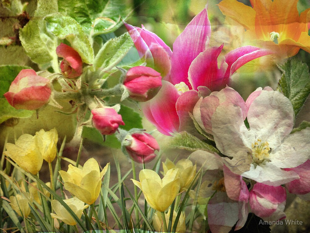 Floral Montage Series 11 by Amanda White