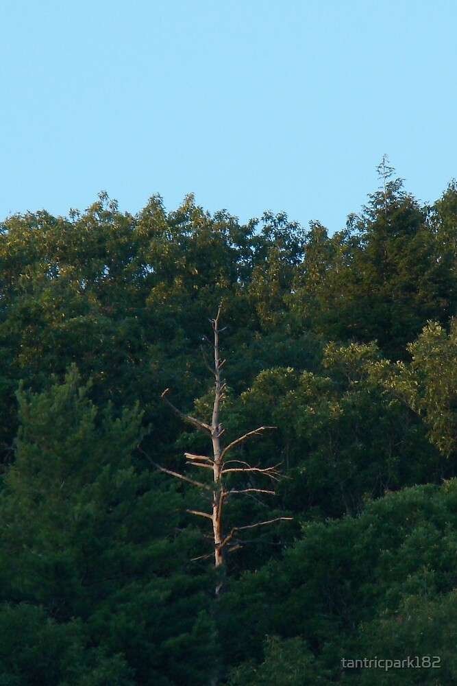 one lone pine by tantricpark182