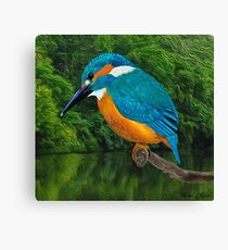 Common Blue Kingfisher Canvas Print