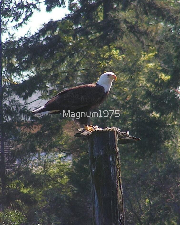 Crofton Eagle by Magnum1975