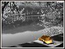 lone leaf by sheilamunk