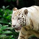 White Tiger by Aneurysm