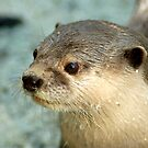 Otter by Aneurysm