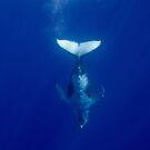 Dive! by Erik Schlogl