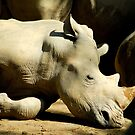 Resting Rhino by Aneurysm