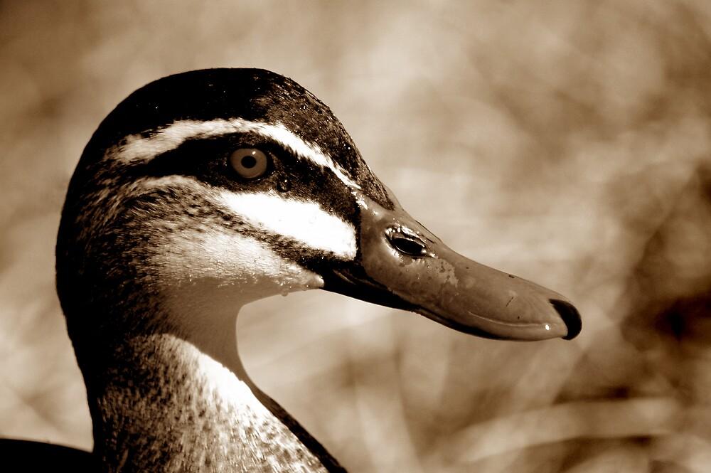 Just ducky by Rachel81