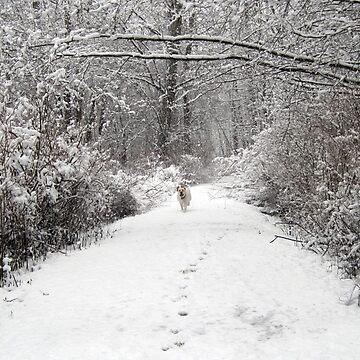 Winter Wonderland by Lesliebc