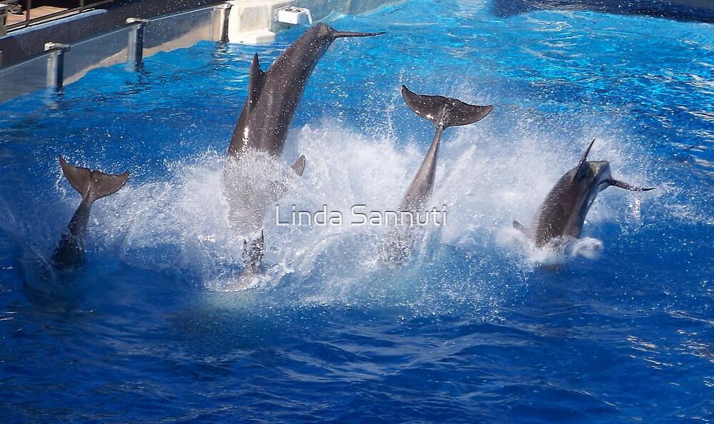 The Dolphin Dive by Linda Sannuti