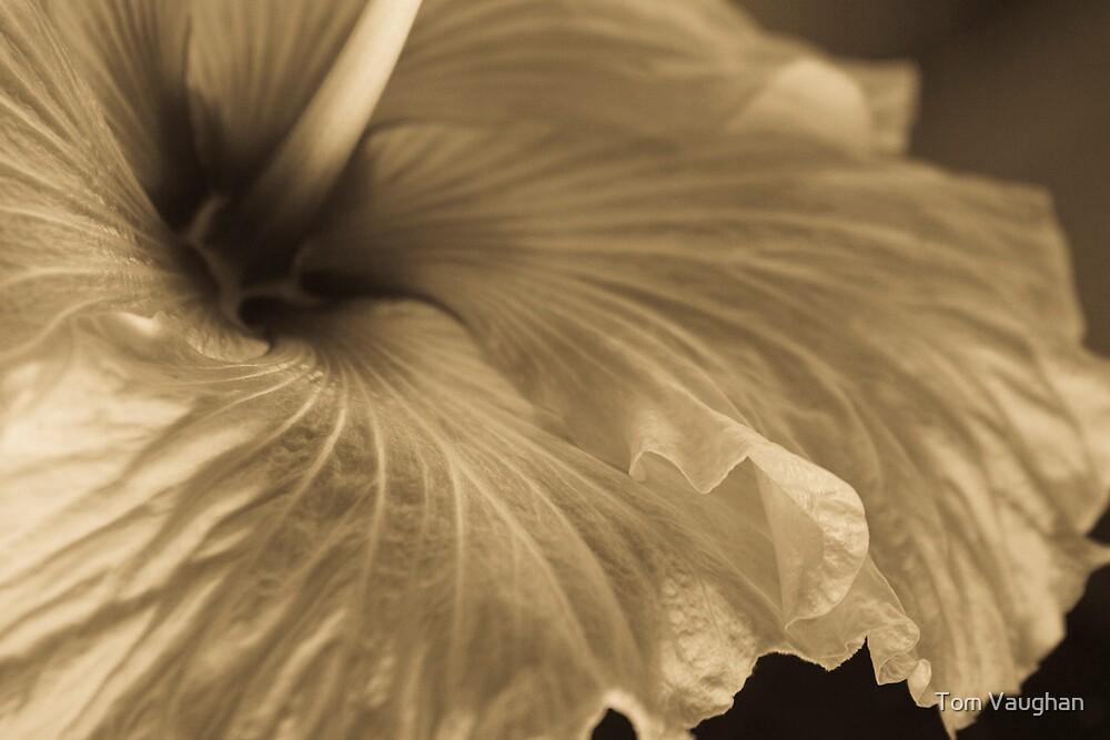 Swirling Silk by Tom Vaughan
