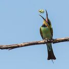 Catch of the Day Rainbow Bee Eater by Kym Bradley