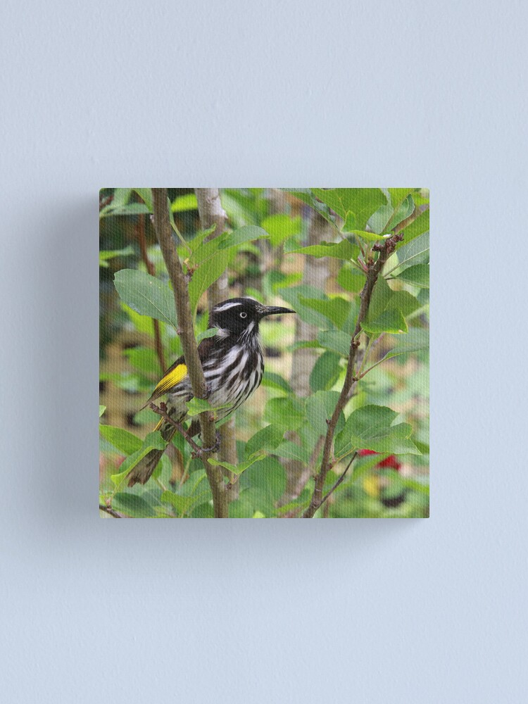 Alternate view of New Holland Honeyeater Canvas Print
