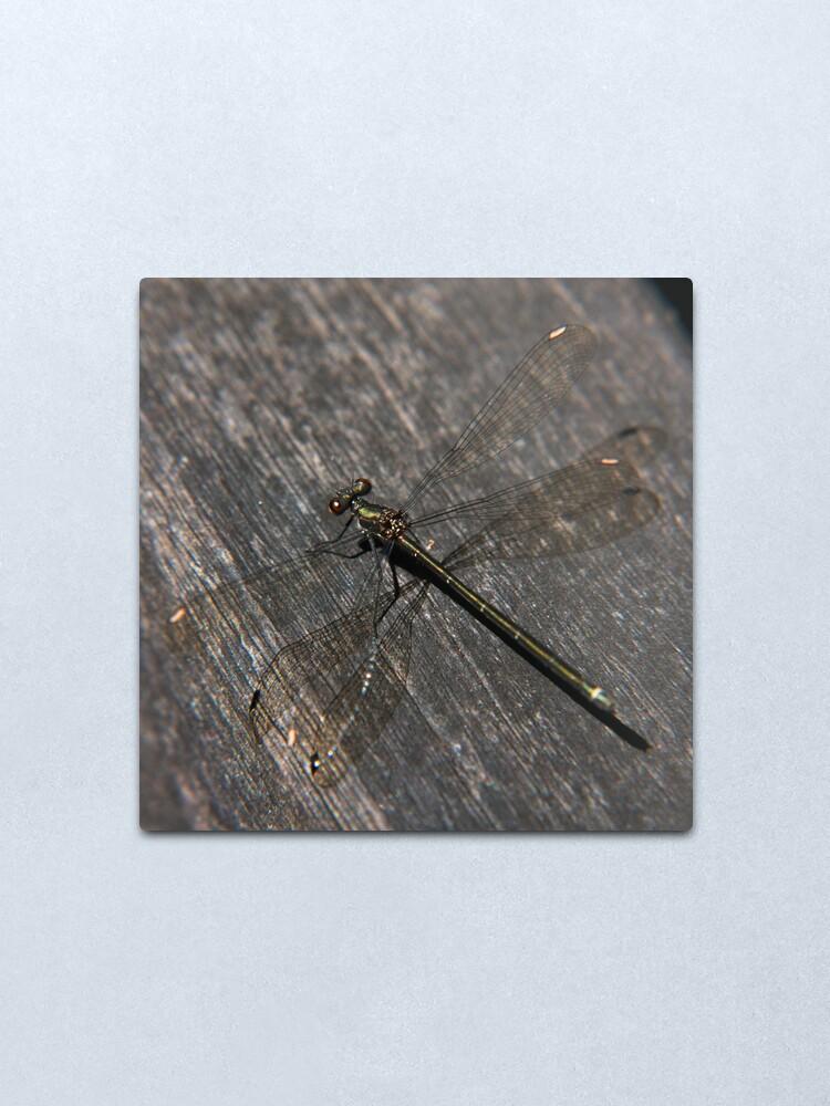Alternate view of Dragonfly Metal Print