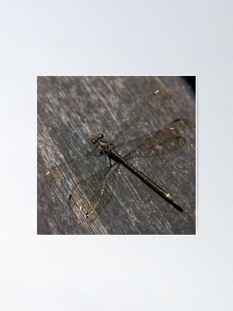 Alternate view of Dragonfly Poster