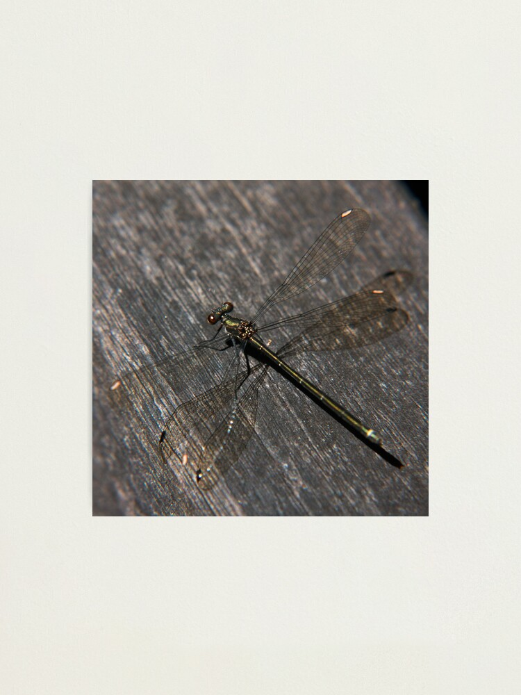 Alternate view of Dragonfly Photographic Print