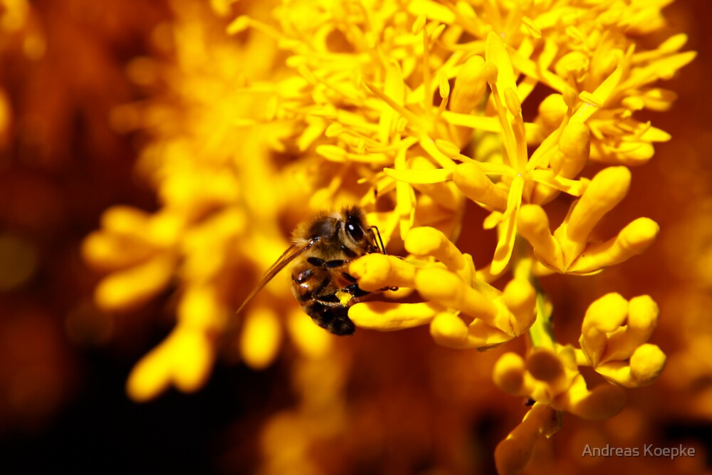 Bee on christmas tree by Andreas Koepke
