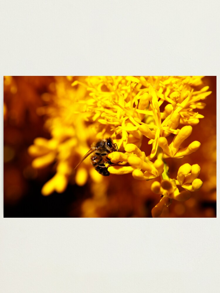 Alternate view of Bee on christmas tree Photographic Print